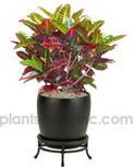 Indoor Small Tropical Plants Service in Minneapolis, M | Interior Office Plants | Scoop.it