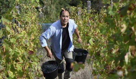 Dans les vignes françaises, un Japonais laisse faire la nature | Le vin quotidien | Scoop.it