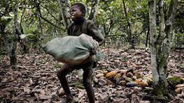 Centenas de milhares de crianças usadas na produção de cacau   Cacau   Scoop.it
