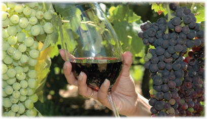 Wines Tour in Napa Valley and Sonoma Valley California | Bay Area Limo Wine Tour Service | Scoop.it