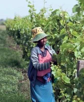 L'éveil viticole africain   Le vin quotidien   Scoop.it
