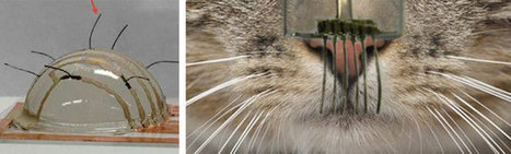 Scientists replicate kitty whiskers to help robots 'feel' | Robotics by Aldebaran | Scoop.it