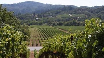 University of Burgundy launches free online wine course | Autour du vin | Scoop.it
