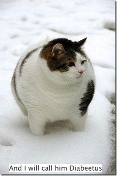 Funny fat cat | Funny Blaster | Scoop.it