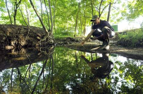 Trout restoration pays off in Oxford's Barber's Hollow Brook - Worcester Telegram | Farming, Forests, Water & Fishing (No Petroleum Added) | Scoop.it