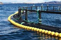Increased use of medicines in Norwegian fish farming | Sustain Our Earth | Scoop.it