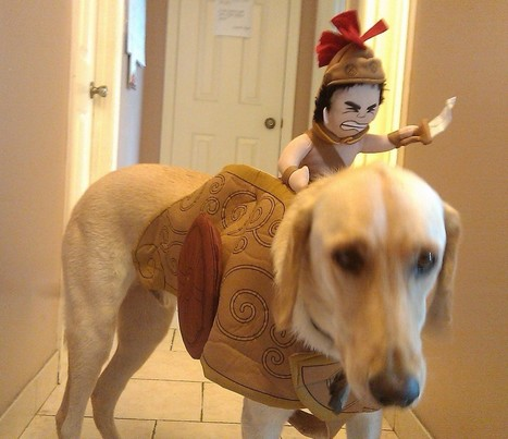Weird Niche Wednesday: Halloween Costumes for Dogs | Weird and Funny Business Ideas | Scoop.it