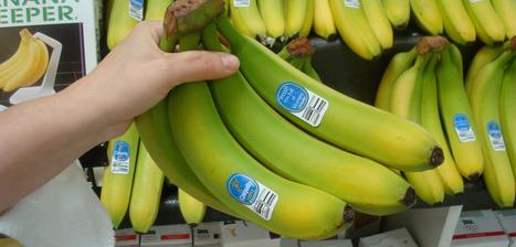 FoodLoop - Save it all! | zero food waste | Scoop.it