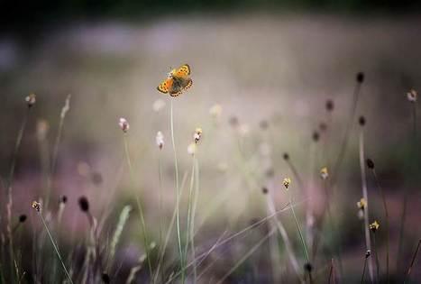 Ce rapport ne laisse aucun espoir : l'extinction des pollinisateurs condamne notre existence | apiculture 2.0 | Scoop.it