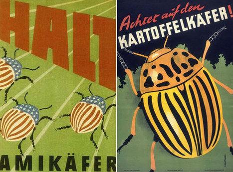 The great Cold War potato beetle battle | European History 1914-1955 | Scoop.it
