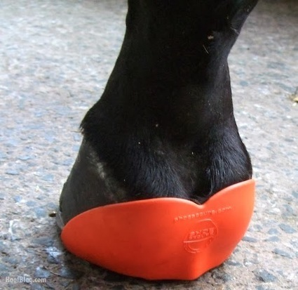 ShoeSecure Conquers Lost-Shoe Season, Now with Global Patent Approved to Keep Horseshoes On Hooves Everywhere | all things horsey | Scoop.it
