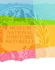 N° 22 - Juillet 2011 : Chute de météorite - le Muséum national d'Histoire naturelle lance un appel à témoins | Toulouse La Ville Rose | Scoop.it