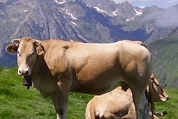 Flashez votre barquette de bœuf et retrouvez son origine | Geeks | Scoop.it