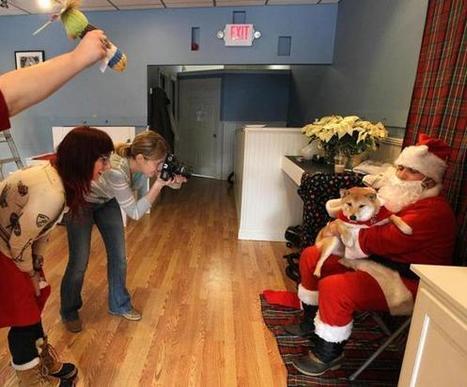 The dog days of Christmas - Boston Globe | The Dog Blogger | Scoop.it