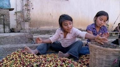 Terrible révélation : le business du commerce équitable   Géo :café & commerce équitable   Scoop.it