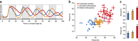 Domestication selected for deceleration of the circadian clock in cultivated tomato | Emerging Research in Plant Cell Biology | Scoop.it