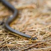Morsure de serpent : quels symptômes, que faire, e-sante.fr | senegal sante | Scoop.it