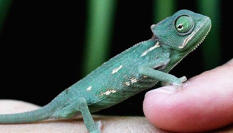 The Workplace Sorcery of Chameleons and Mimics | IT and Leadership | Scoop.it