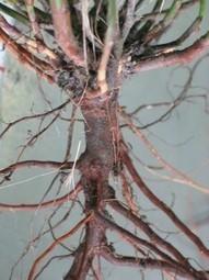 Breath As A Tap Root « BREATHING SPACES | Breathwork | Scoop.it