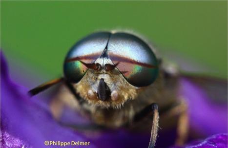 Biomimétisme : la nature c'est 4 milliards d'années de R&D | EntomoNews | Scoop.it