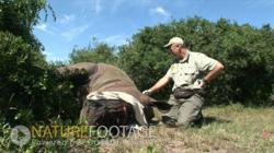 Footage Search Announces Exclusive HD Rhino Poaching Footage ... | What's Happening to Africa's Rhino? | Scoop.it