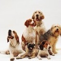 Seven Best Dogs Breeds for Family and Kids | Pets World | pets world | Scoop.it