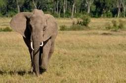 Reason for Extinction of Endangered Species in India | Wildlife of India | Scoop.it
