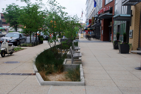 Research Shows Trees in Bioswales Provide Significant Stormwater Benefits | DeepRoot Blog | Tree News | Scoop.it