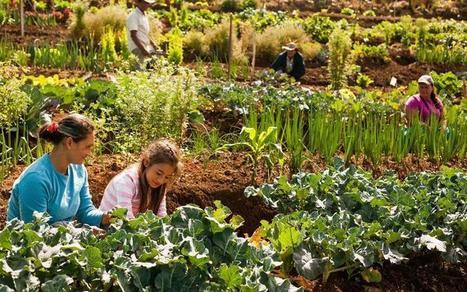 Diferencias entre agroecología y producción orgánica - La Huerta de Antonia | Cultivos | Scoop.it
