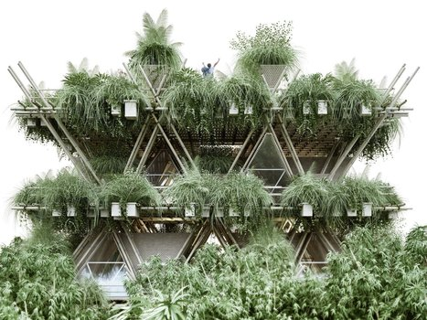 Chinese cities of the future could be made of bamboo - Tech Insider (blog) | Permaculture, Horticulture, Homesteading, Bio-Remediation, & Green Tech | Scoop.it