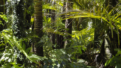 La Norvège devient le premier pays à interdire l'importation de produits issus de la forêt tropicale - Soocurious | décroissance | Scoop.it