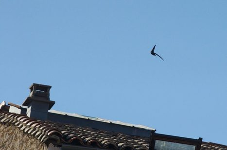 Sur ma terrasse – Le Saule Causeur | C@fé des Sciences | Scoop.it