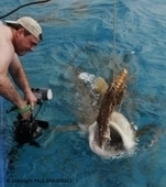 Greg Amptman - Fine Art   Undersea Discoveries   Scoop.it