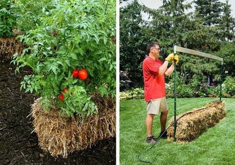 Straw Bale Gardening   TheWHOot   Organic Gardening   Scoop.it