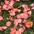 Corail : une couleur tendance pour mon mariage | mariage | Scoop.it