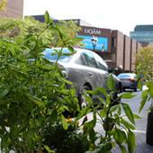 L'agriculture urbaine qu'est-ce que ça mange? - Agriculture urbaine Montréal | Constructions écologiques | Scoop.it