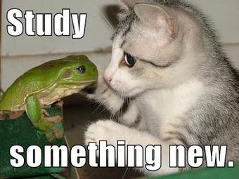 Growth Mindset Memes | Leading Schools | Scoop.it