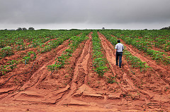 World Will Pay Dear If It Fails to Combat Land Degradation | Henna Bio Fence | Scoop.it
