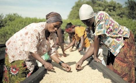 Rwanda: Kirehe Coffee Farmer Reaps Big From Co-operative Marketing | Market information | Scoop.it