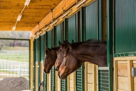 A gift from Papiese family: a 20-stall barn opens | Horse Racing News | Scoop.it