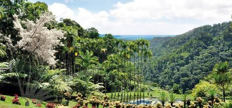 Jardin de Balata | Incontournable en Martinique | Martiniques news | Scoop.it