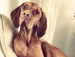 10 Dog breeds that behave like cats - SheKnows.com | All Things Dog | Scoop.it