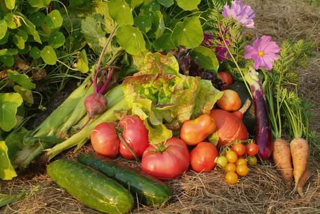 Top 5 Reasons to Eat a Plant-Based Diet | Vegan Logic | Scoop.it
