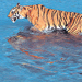 Go wild - Hindustan Times | Wildlife in India | Scoop.it