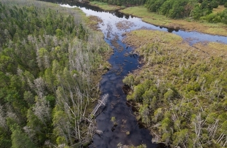 These Tragic Photos Reveal a Forest Dying From Rising Sea Level | Citizens' Environmental Coalition (Houston) | Scoop.it