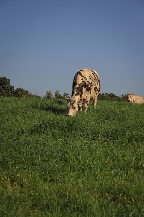 Symbiose, le mensuel des agrobiologistes de Bretagne | symbiose développement environnement | Scoop.it