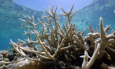 Great Barrier Reef: the scale of bleaching has the most sober scientists worried | OMG - Ocean Marine Guardians | Scoop.it
