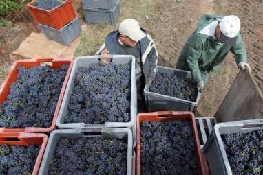 Les vendanges prévues le 10 septembre en Champagne | Route des vins | Scoop.it