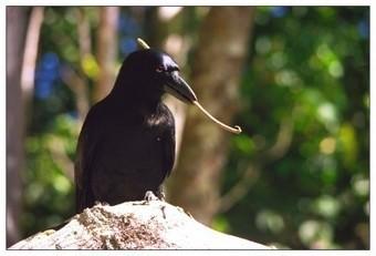 Who ya callin' bird brain? - Washington Post | Banco de Aulas | Scoop.it