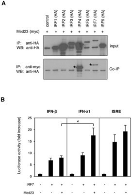 PLOS Pathogens: A Systematic Analysis of Host Factors Reveals a Med23-Interferon-λ Regulatory Axis against Herpes Simplex Virus Type 1 Replication | Cold Sore Remedies | Scoop.it